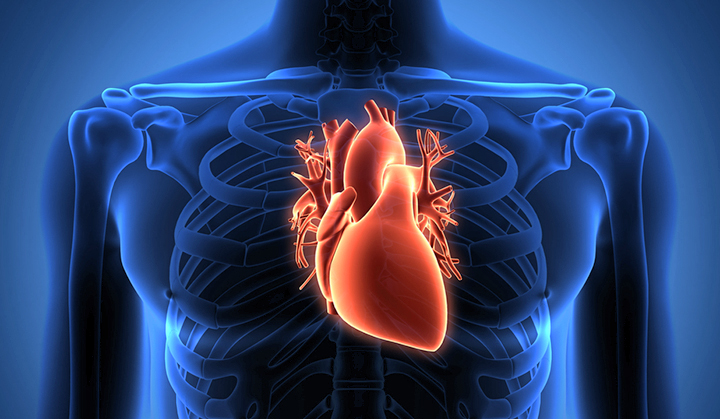 Scientists pinpoint a protein that affects heart transplant survival