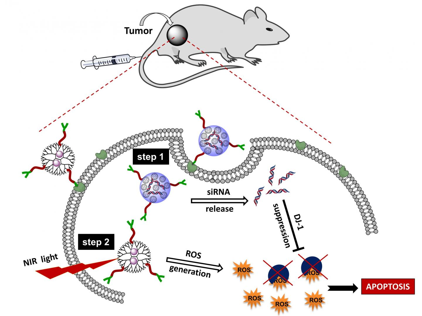 Advance In Photodynamic Therapy Offers New Approach To Ovarian Cancer