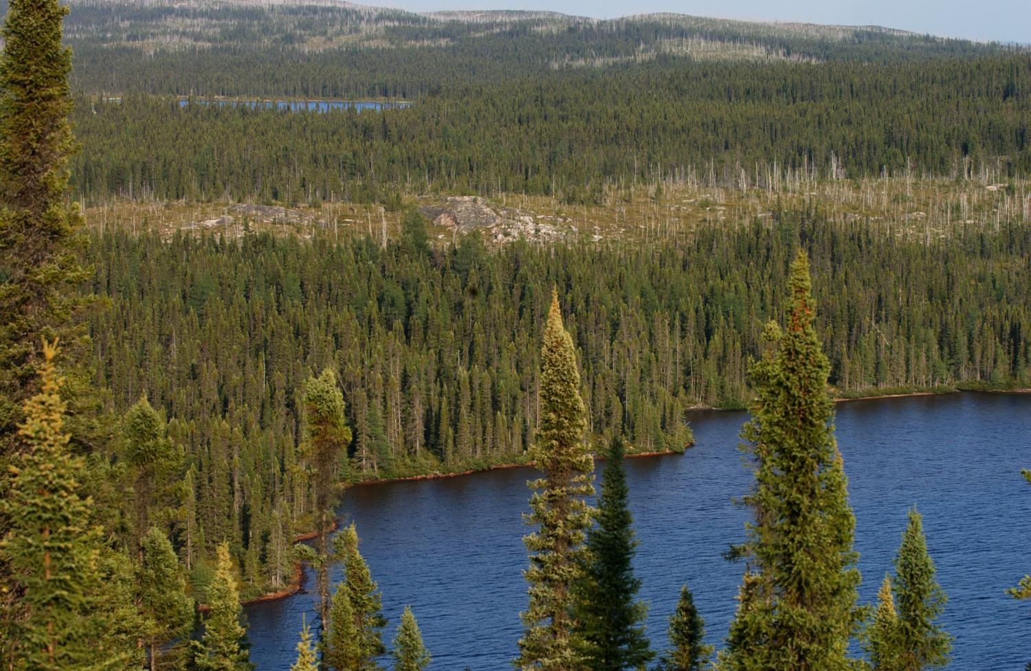 Deciduous trees offset carbon loss from Alaskan boreal fires, new study finds