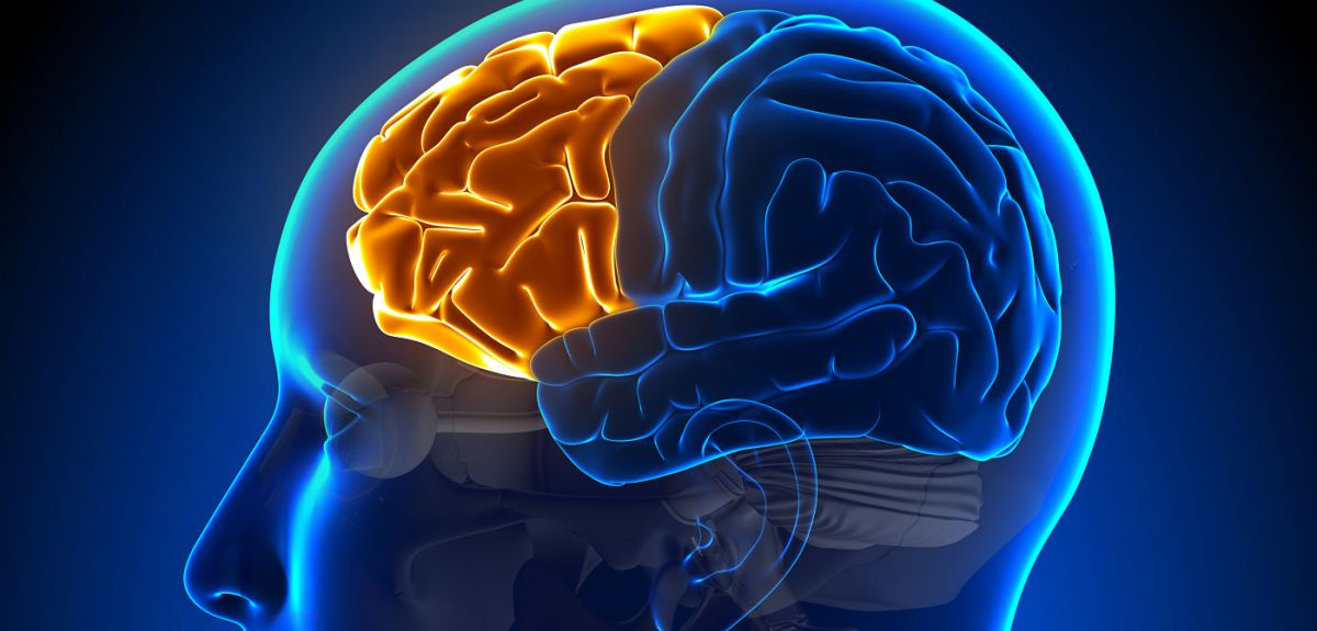 Workings of working memory revealed