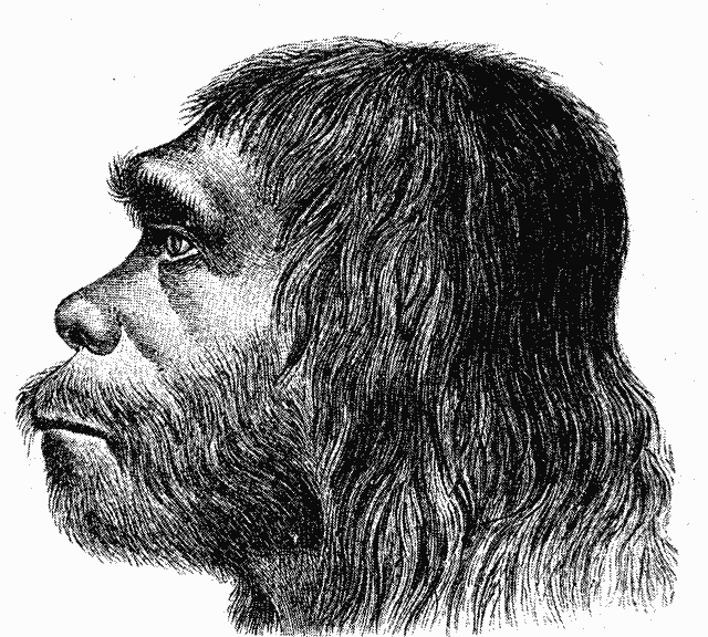 Neanderthal and Denisovan DNA may have helped early Melanesian people survive