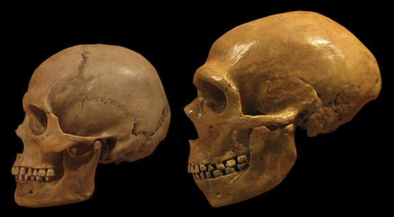The impact of Neandertal DNA on human health