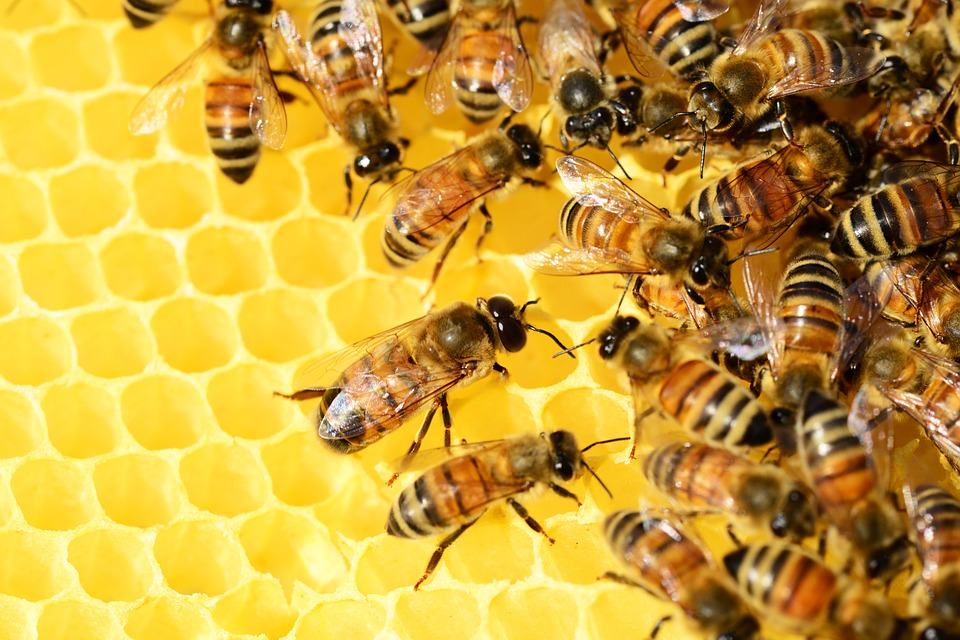 Scientists develop a novel algorithm inspired by bee colonies to help dismantling criminal social networks