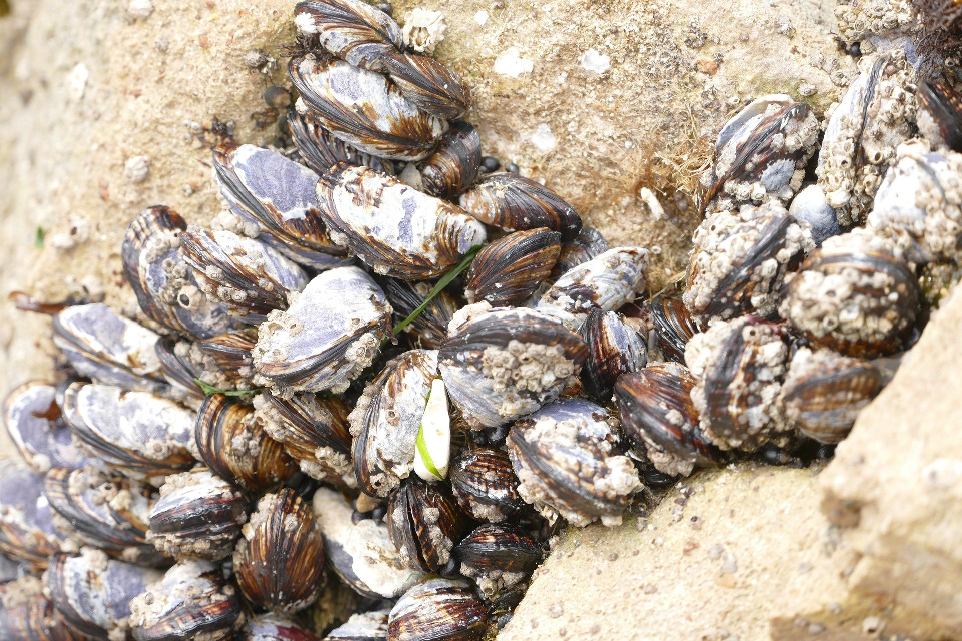 How much is a clam worth to a coastal community?