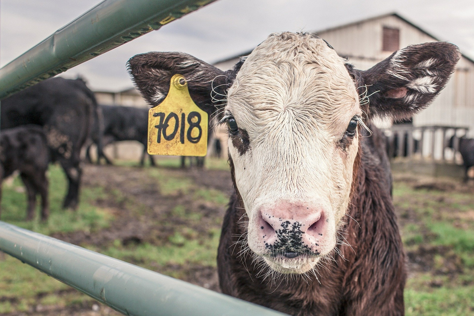 Environmental dissemination of beef cattle agrochemicals