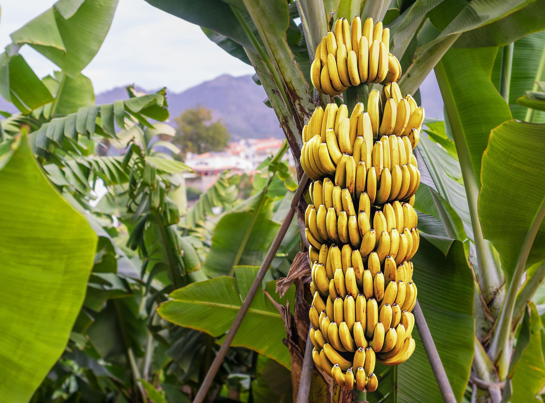 Half peeled banana. — Stock Photo © jurisam #158327206