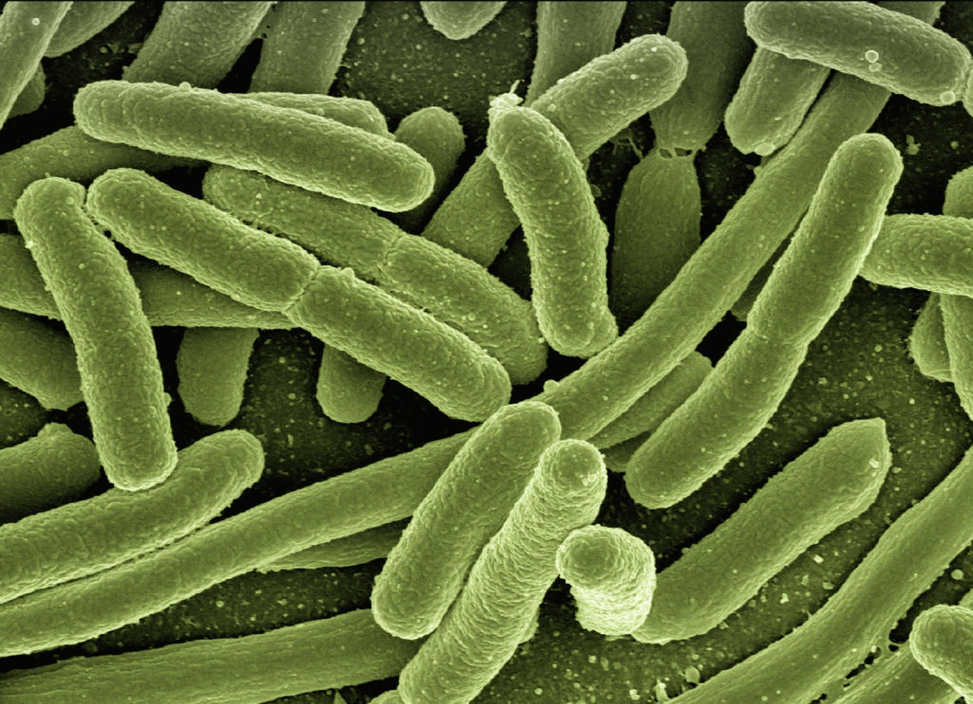 photo of Bacterial DNA can be read either forwards or backwards: study image