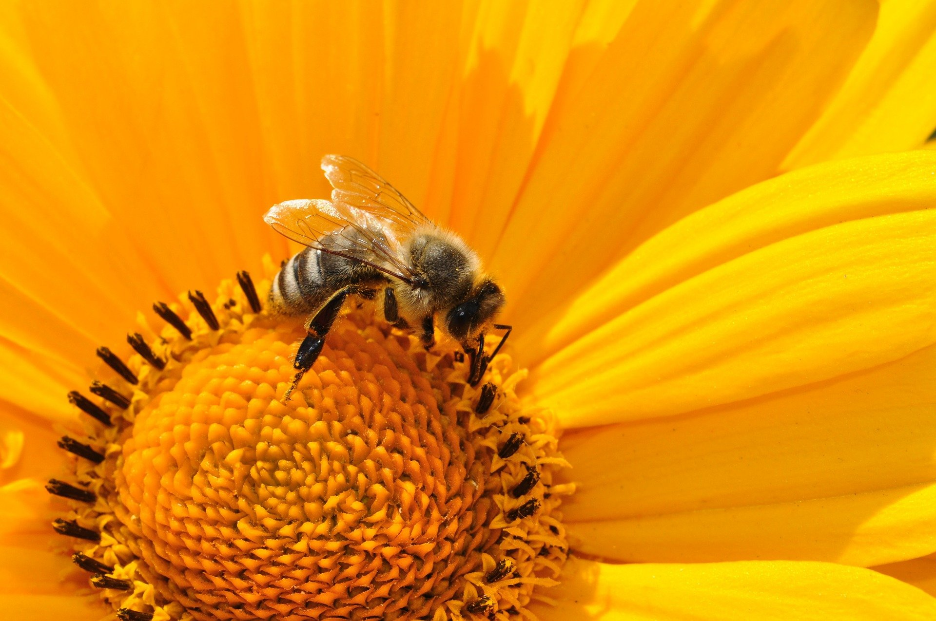 photo of France bans two US pesticides, citing risk to bees image
