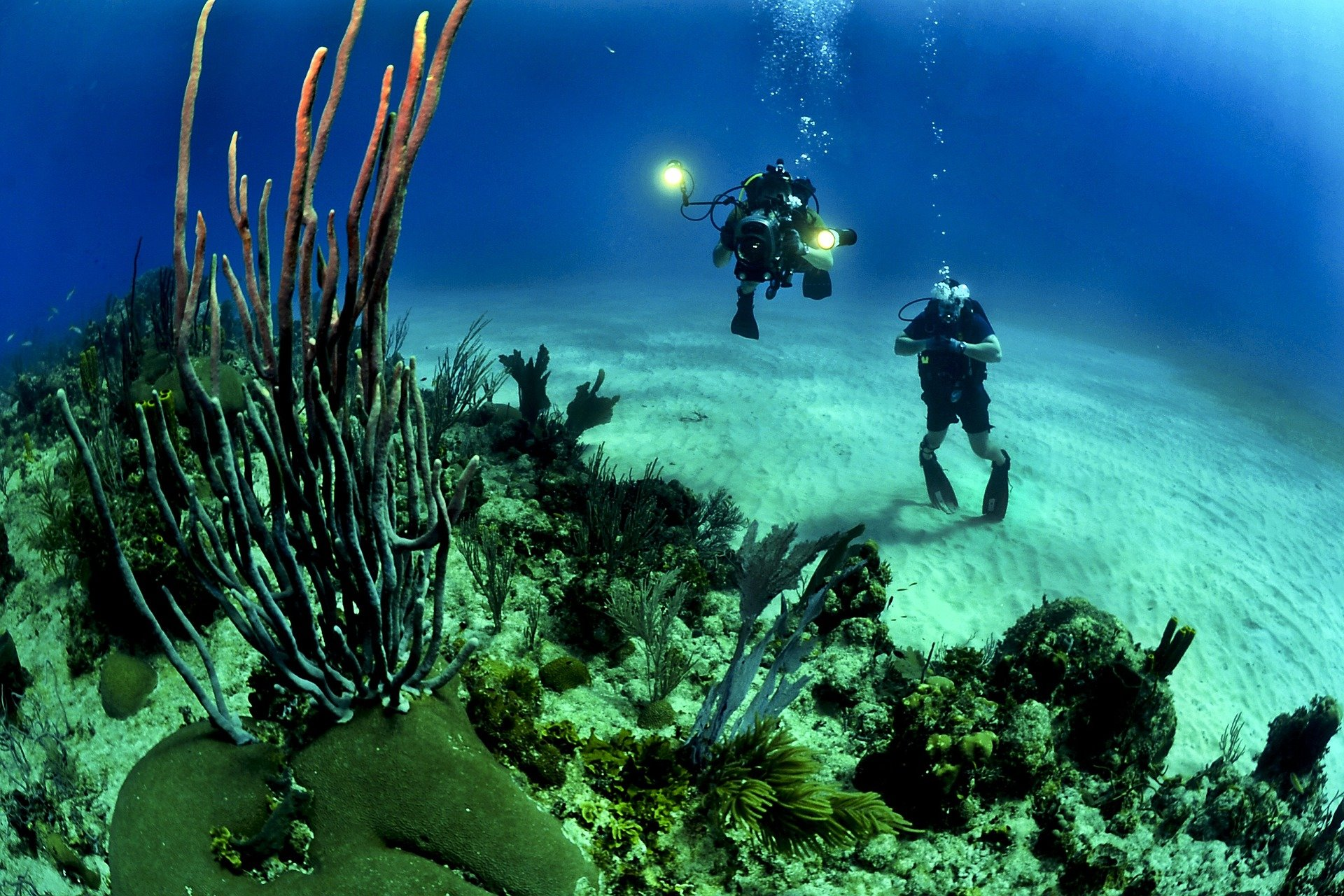 What happens to marine life when oxygen is scarce?