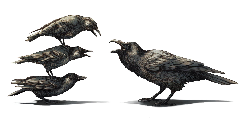 crowsarealwa.jpg