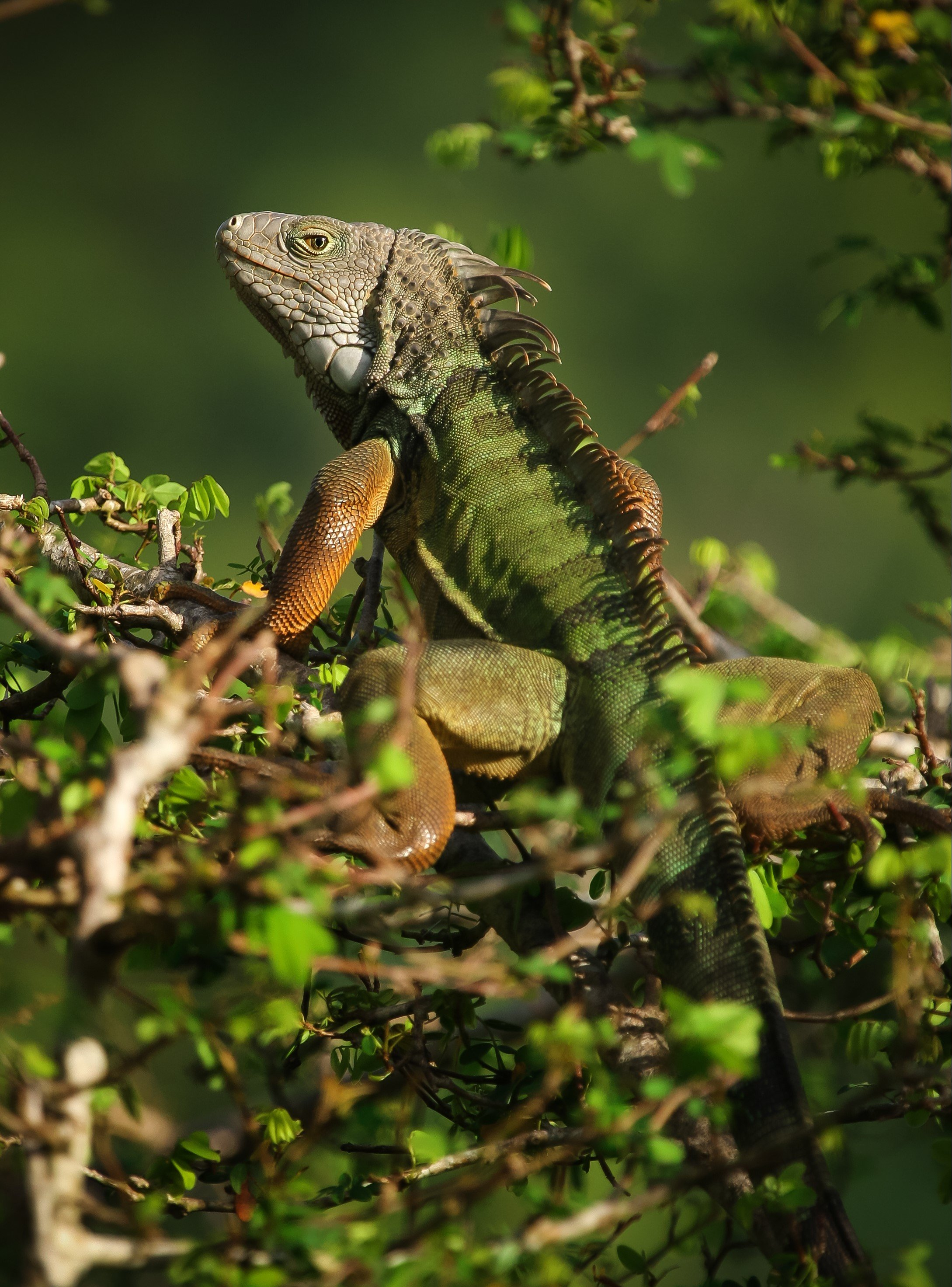 For exotic pets, the most popular are also most likely to ...