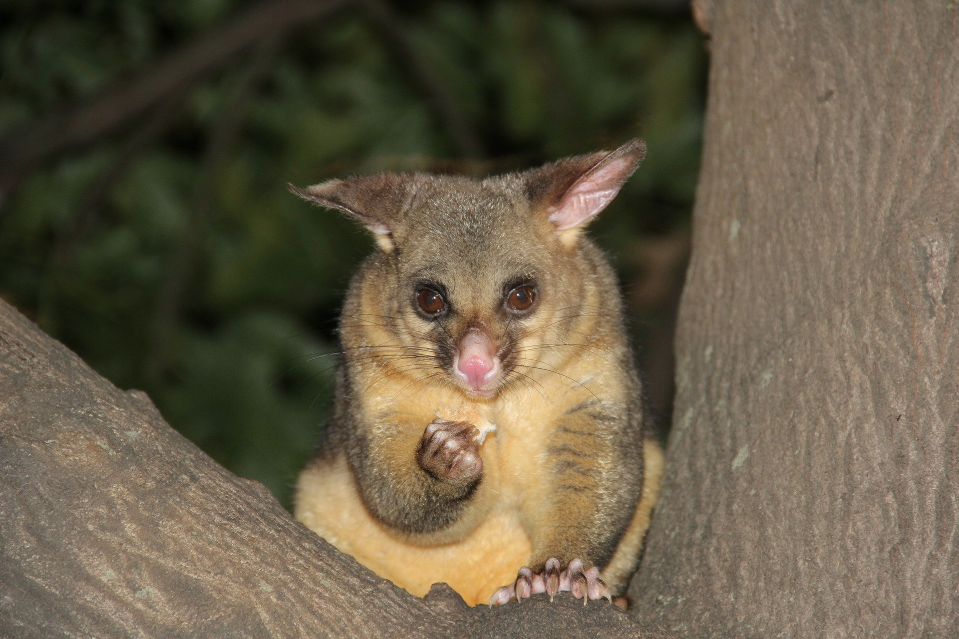 Hot Possums Risk Losing Their Homes