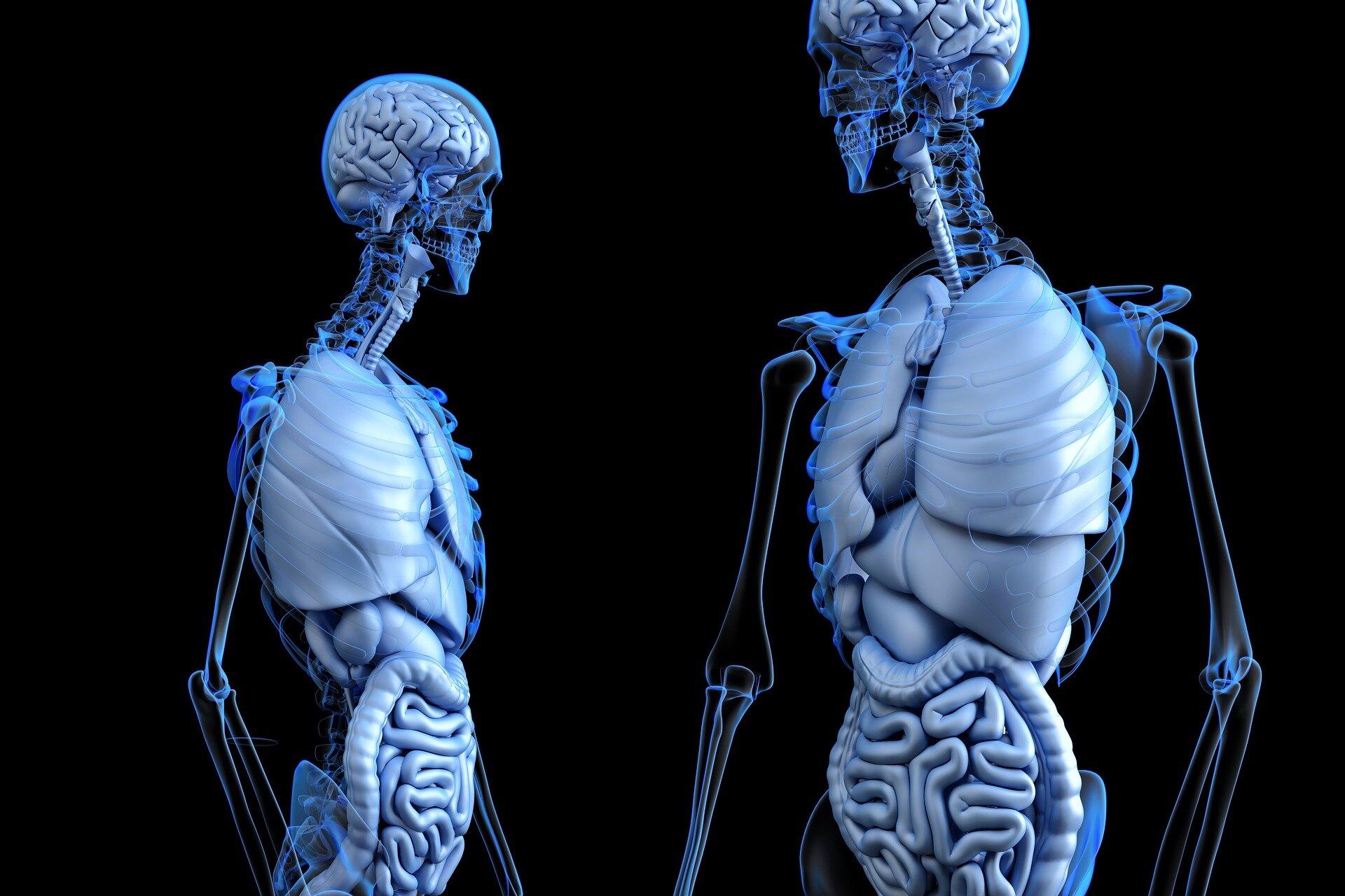 Stronger bones thanks to heat and microbiota