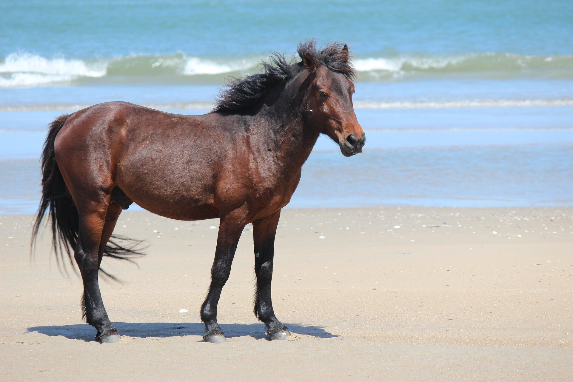 Outer Banks Wild Horses Let Big White Birds Ride Them For A Good Reason Expert Says