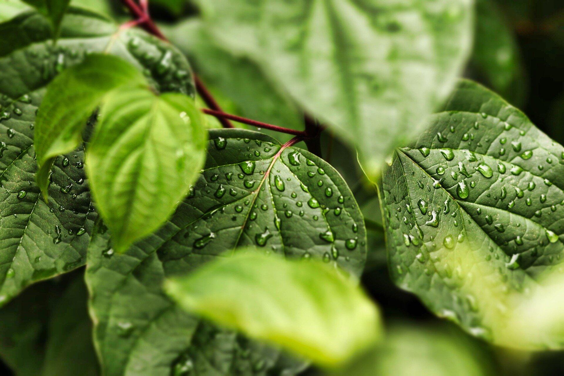 Plant water saving system works like clockwork, it transpires