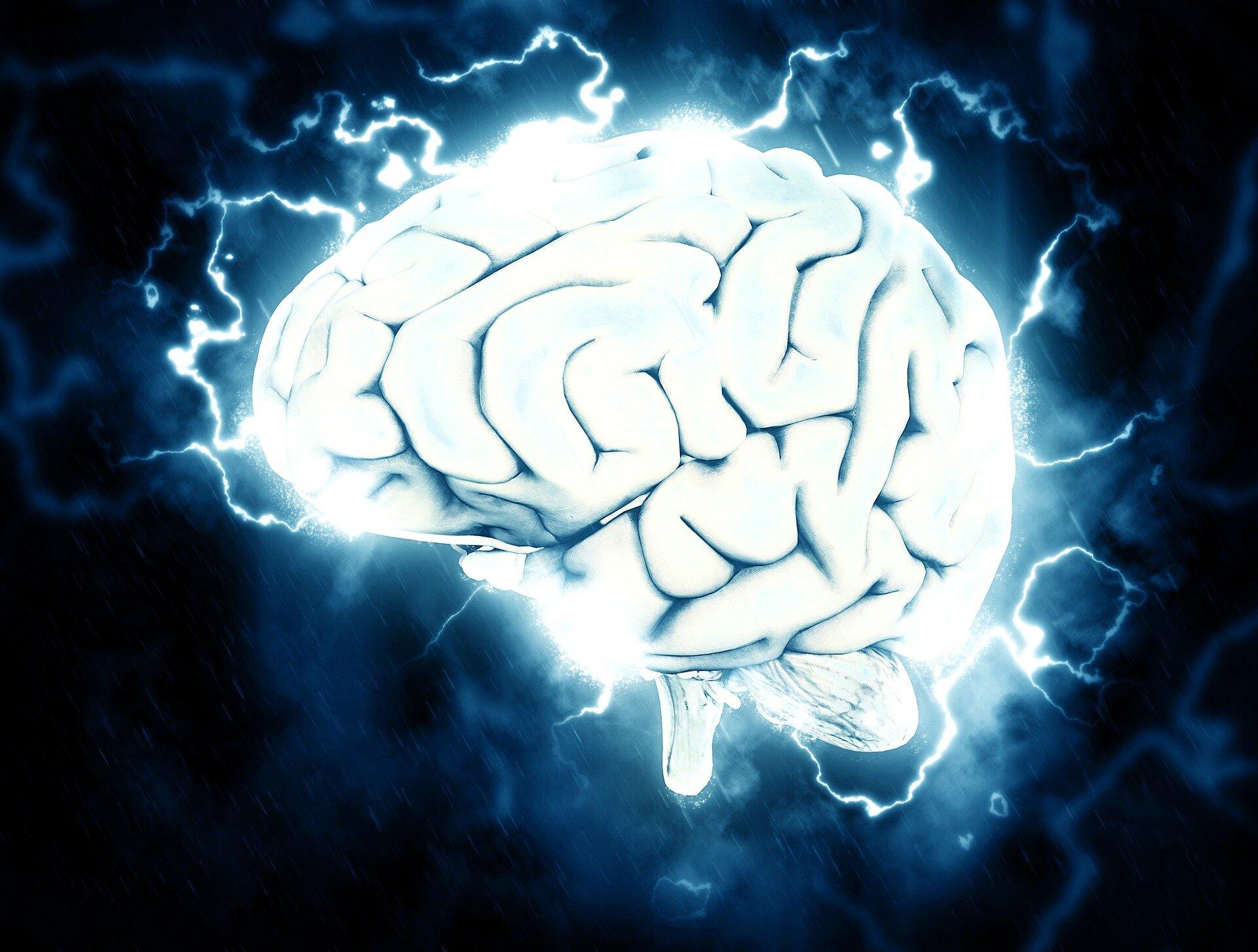22 brain.'