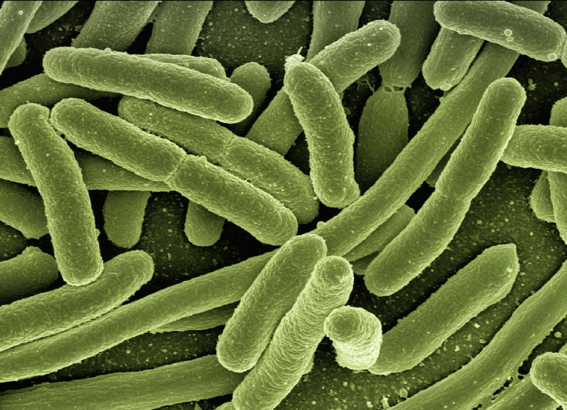How good gut bacteria help reduce the risk for heart disease