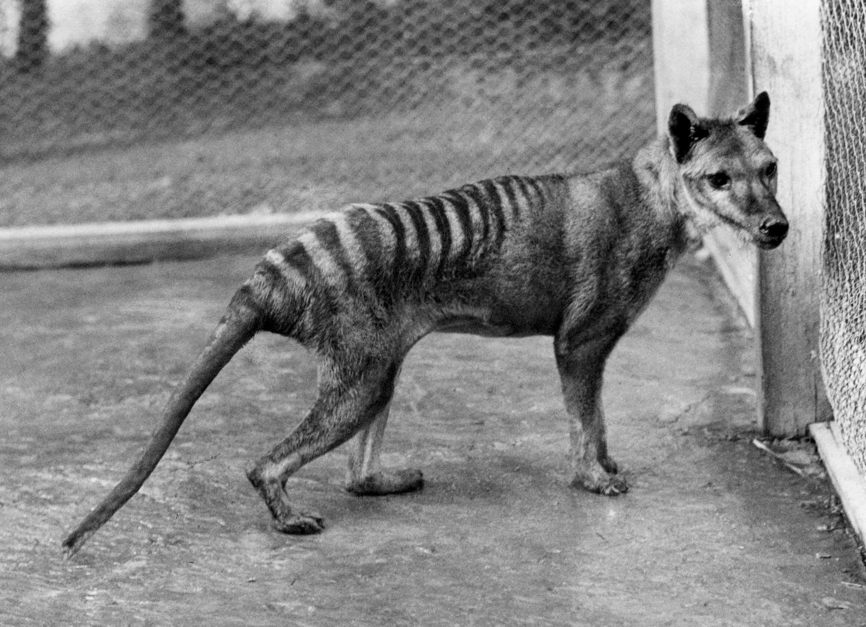 Scientists re-counted Australia's extinct species, and the result is devastating