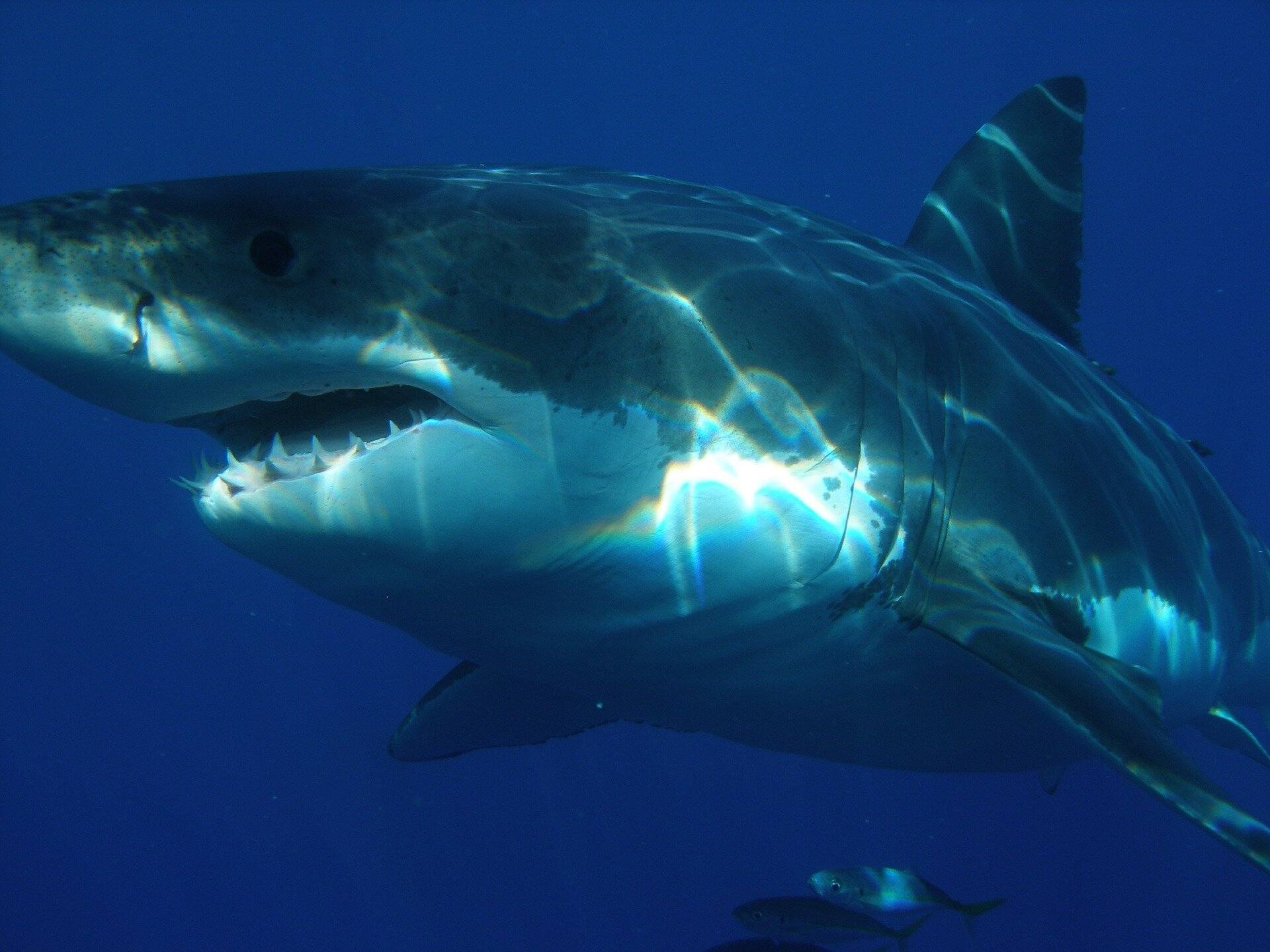 photo of Anti-shark device cuts likelihood of attack by two-thirds image