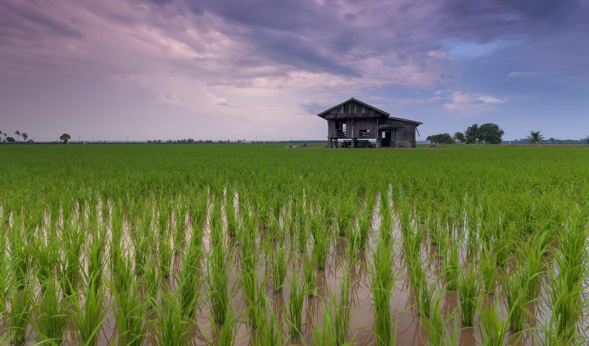 Dietary components decrease cadmium bioavailability in rice