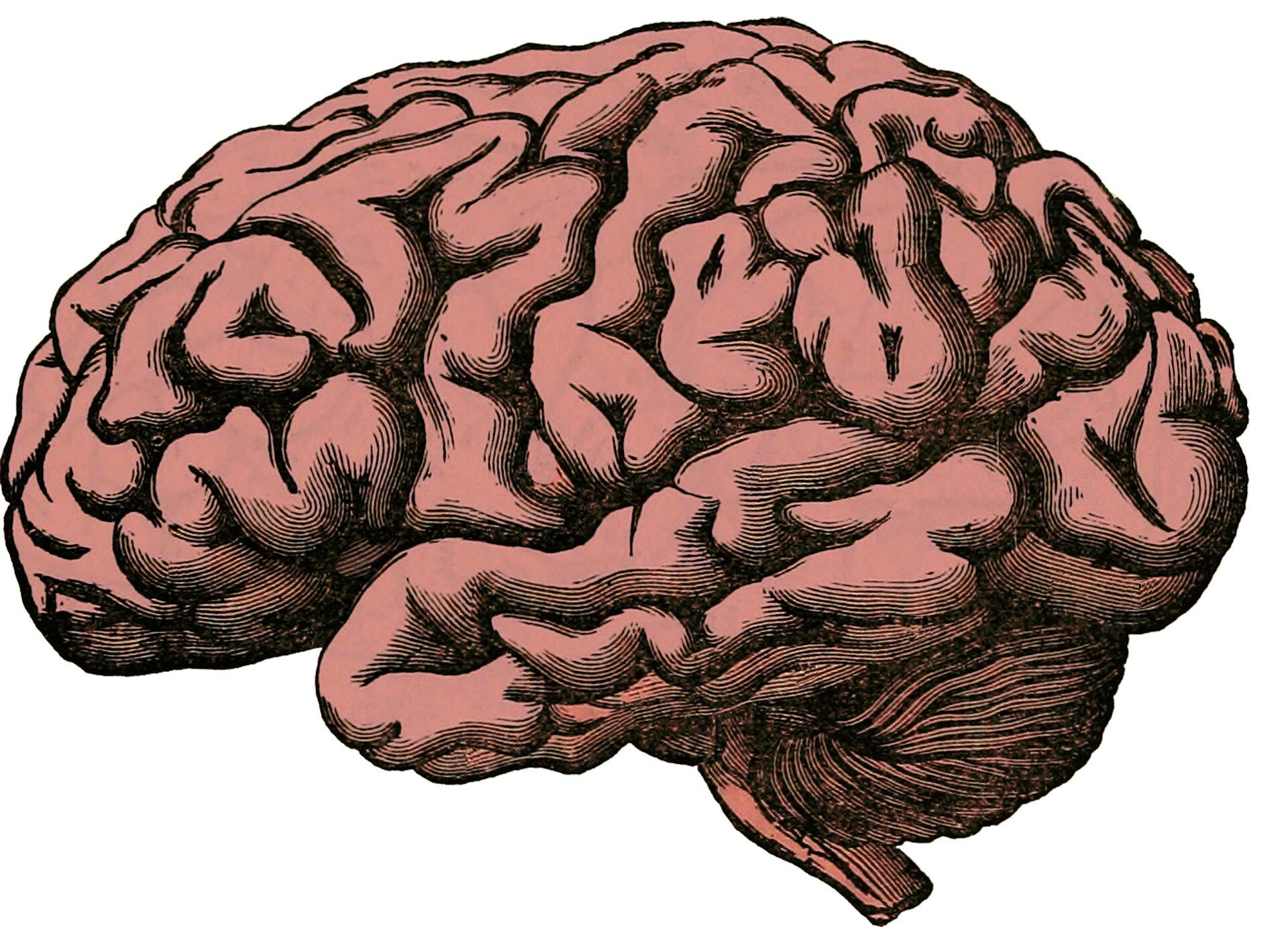 Could parasite manipulation explain human neurological evolution?