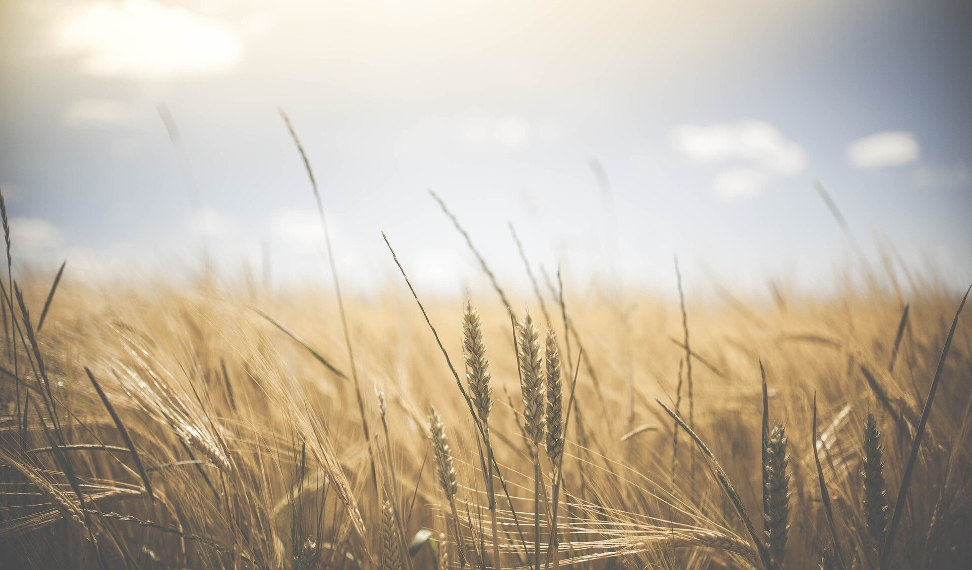 Farmers' climate change conundrum: Low yields or revenue instability