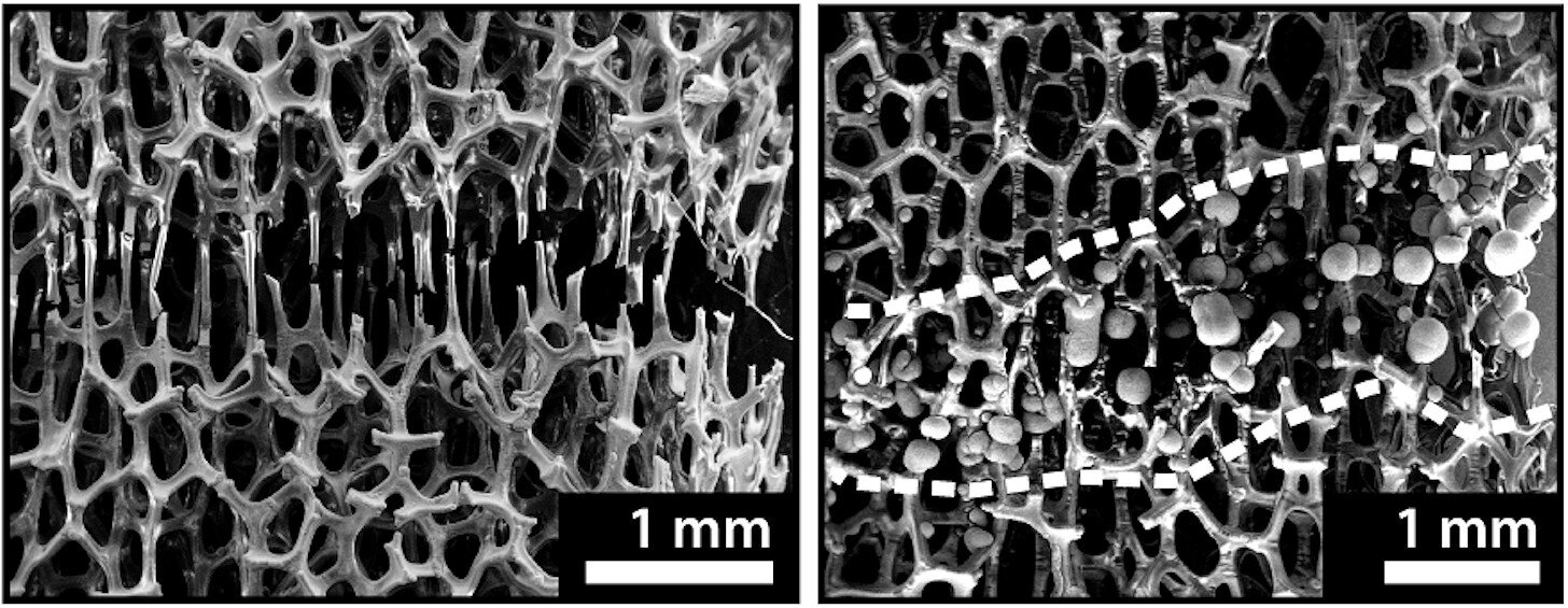 """Broken and """"Healed"""" Metal Foam (from Phys.org)"""
