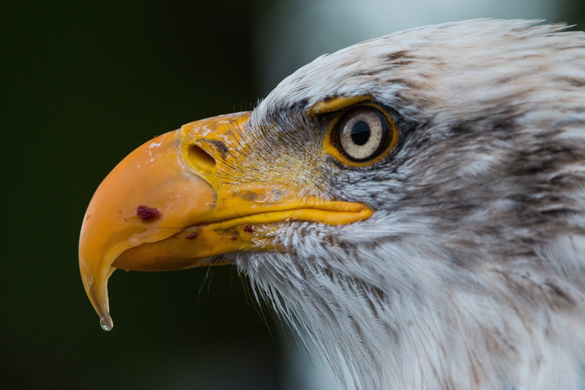 Bald Eagles Have Found Themselves A New Home Suburbia