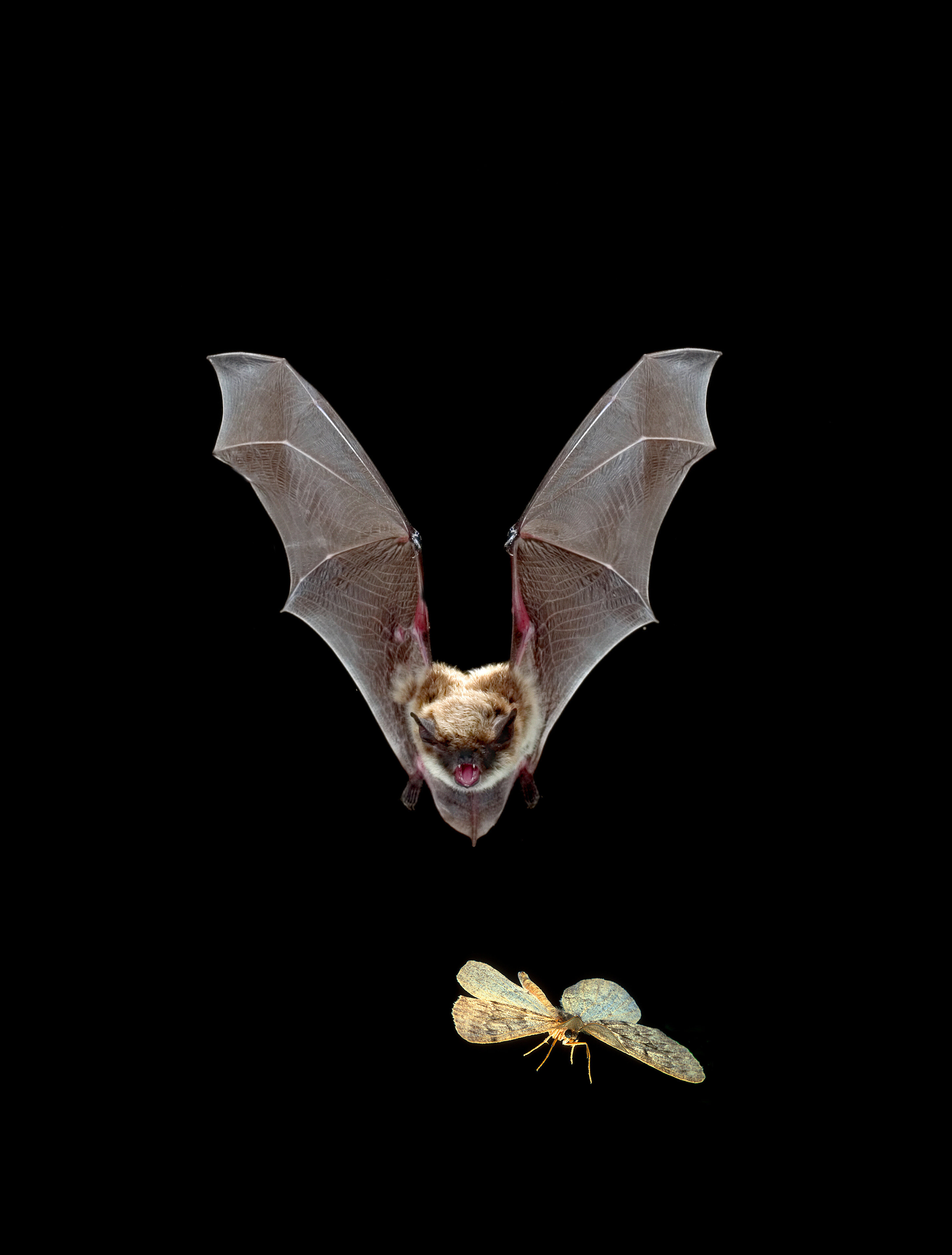 Wildfire May Benefit Forest Bats Study