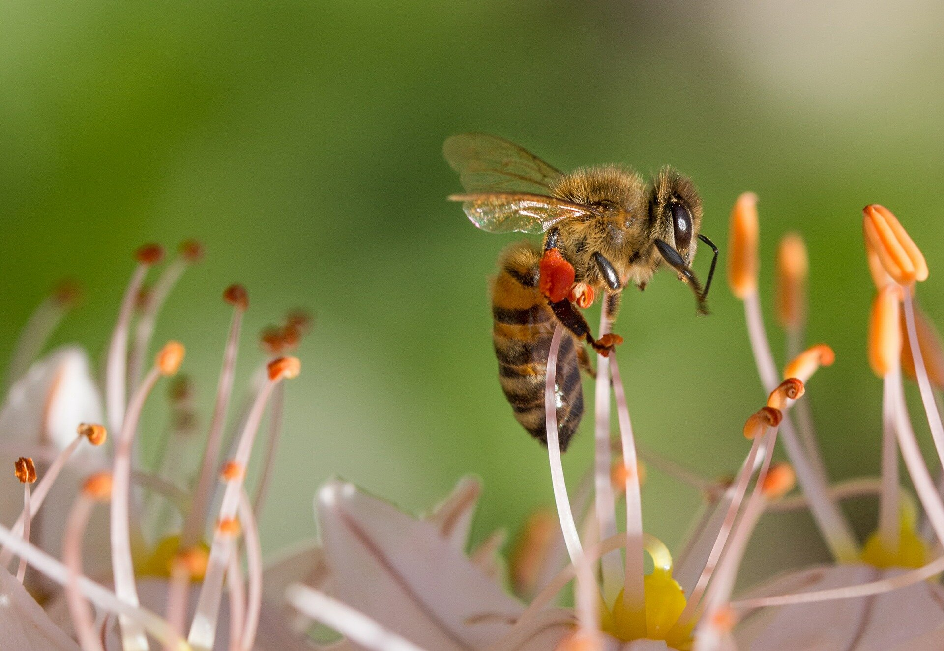 Researchers developing natural pesticide alternative to target pests without harming honeybees
