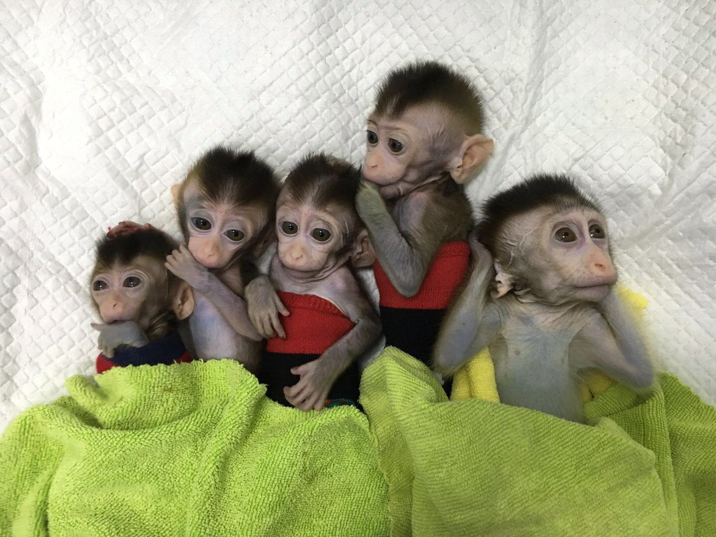 Image result for human cloning