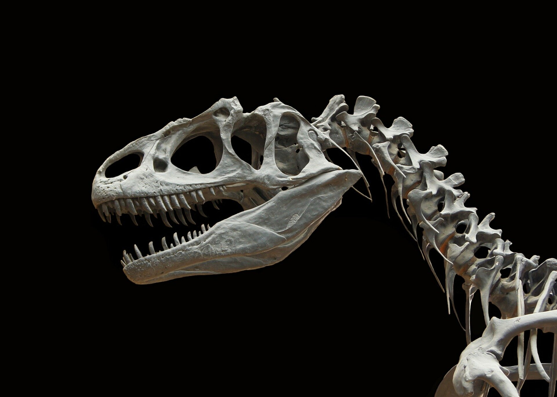 Dinosaur species: 'Everyone's unique'