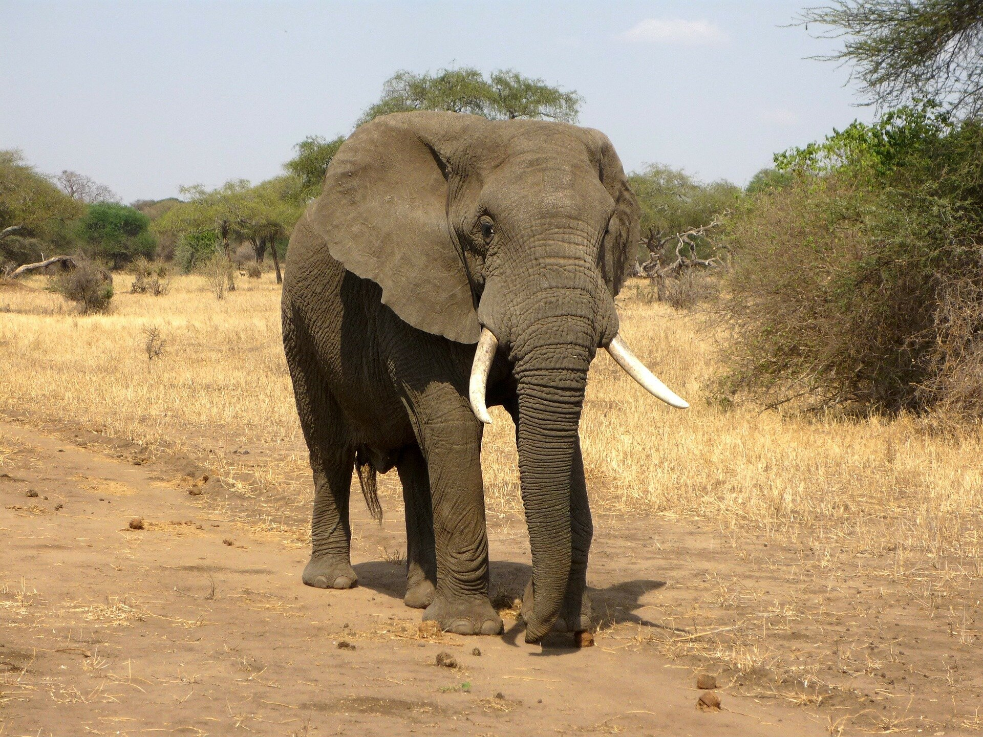 Elephants Can Differentiate Between Food Amounts By Smell Alone