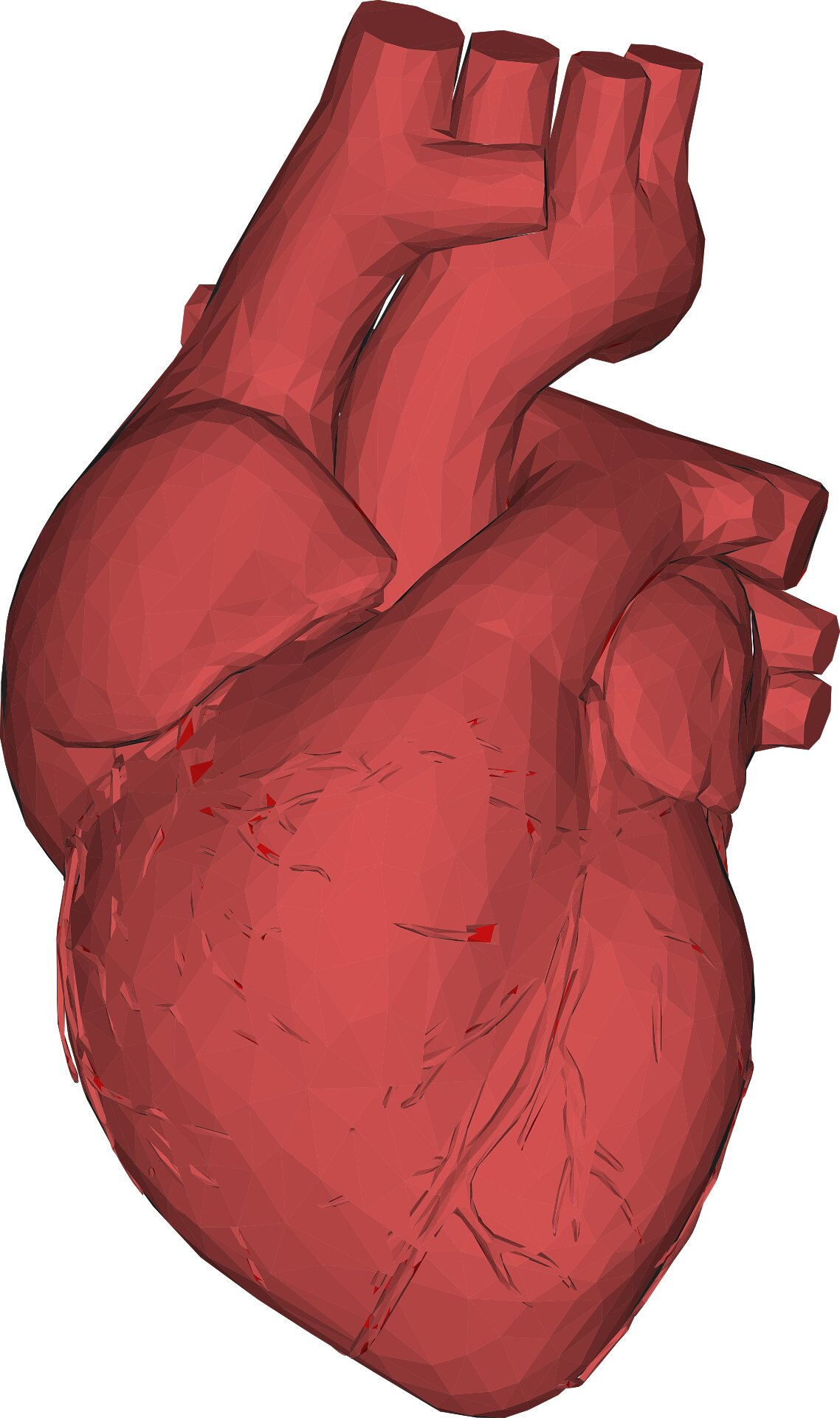 photo of Fast heart, slow heart: Changes in the molecular motor myosin explain the difference image