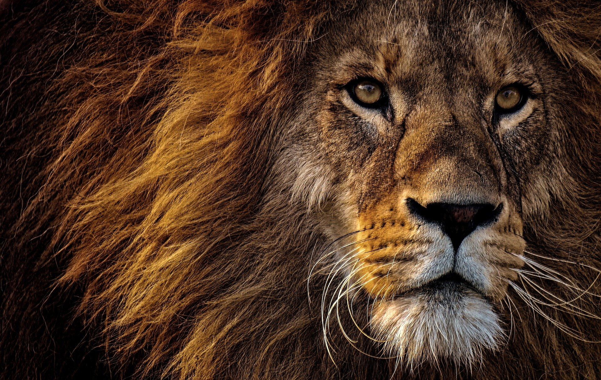 Lion genetics study uncovers major consequences of habitat fragmentation