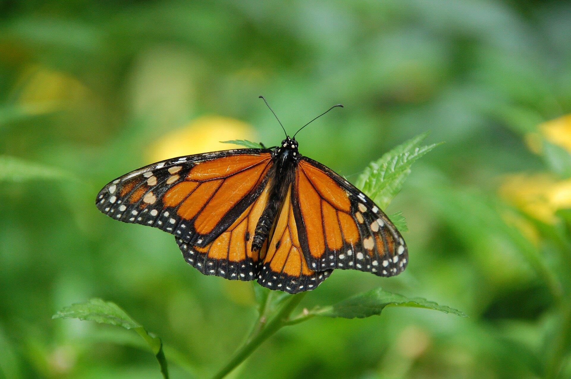 monarchbutte.