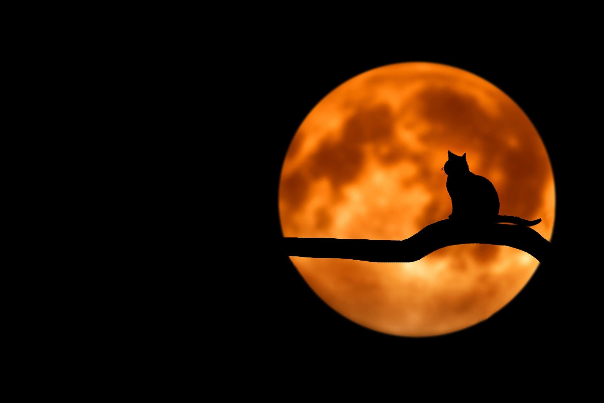 Look up! The Strawberry Moon will shine bright tonight