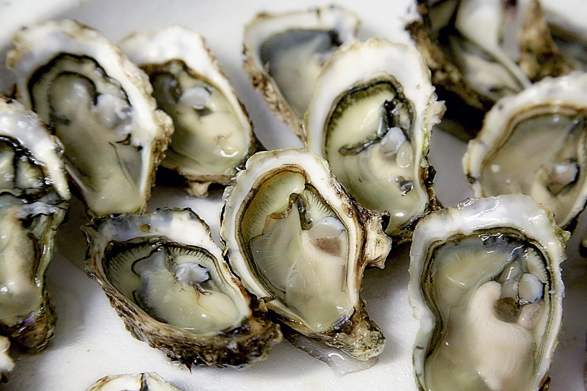 photo of For bay oysters, protection plus restoration creates healthiest reefs image