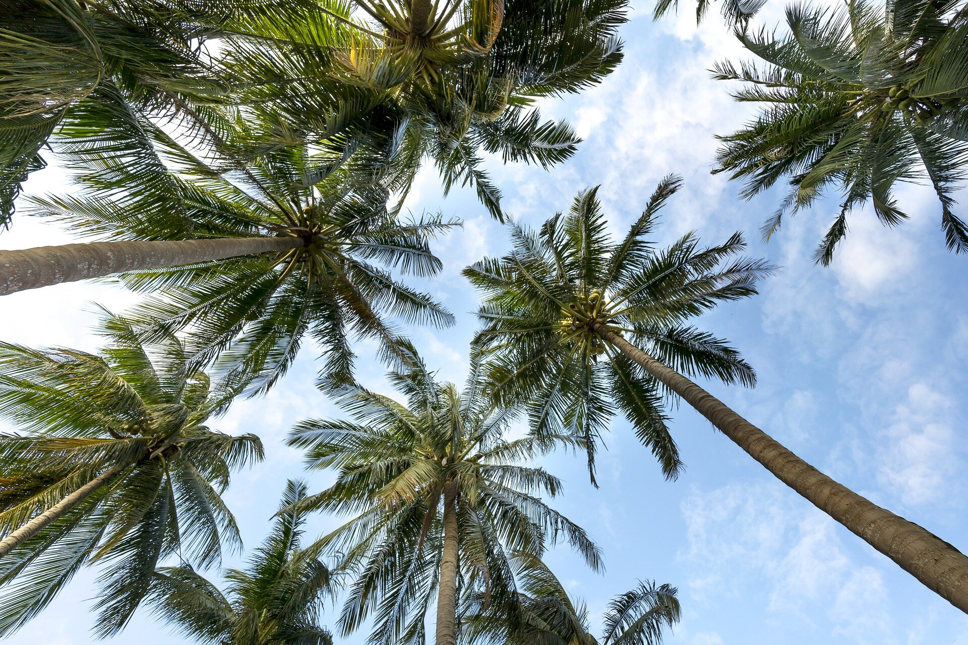 Thousands Of Palm Trees Are Dying From A New Disease