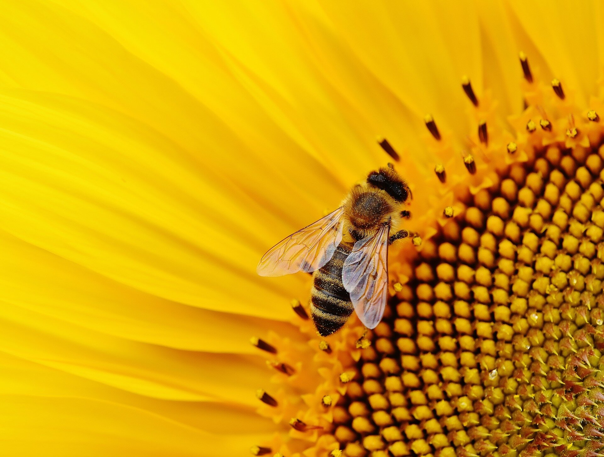 Scientists make fresh call for policy makers to protect pollinators