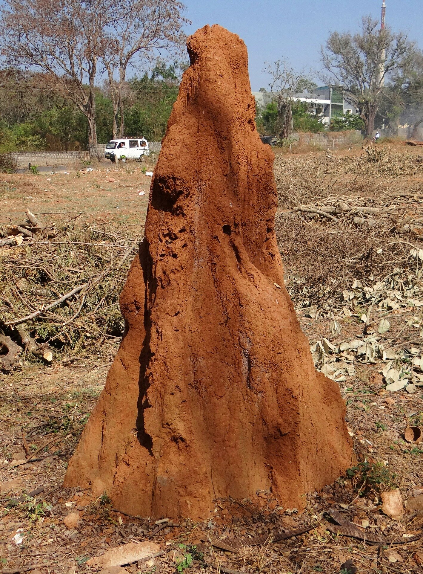 Let S Mimic Termite Nests To Keep Human Buildings Cool