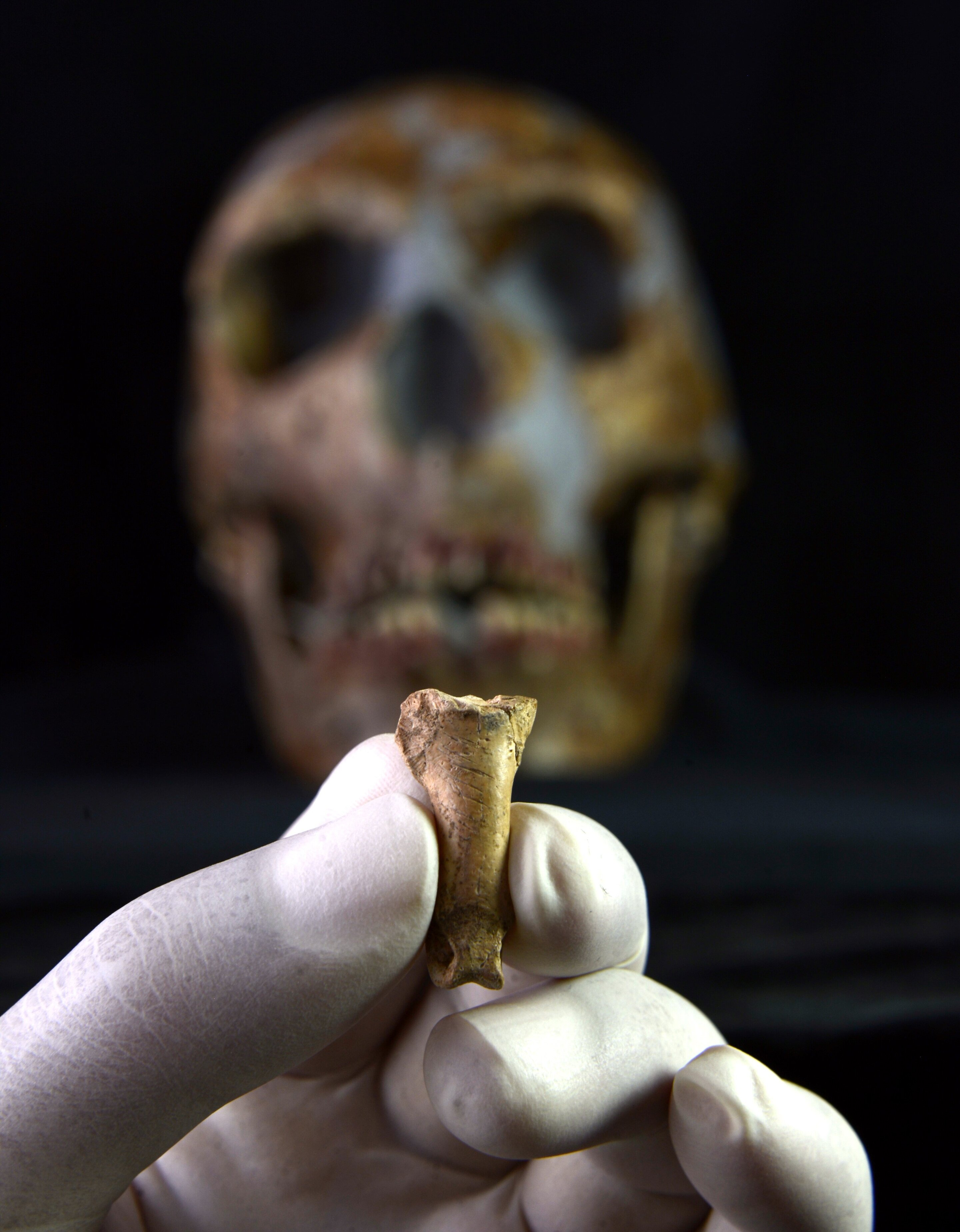 The last Neanderthal necklace