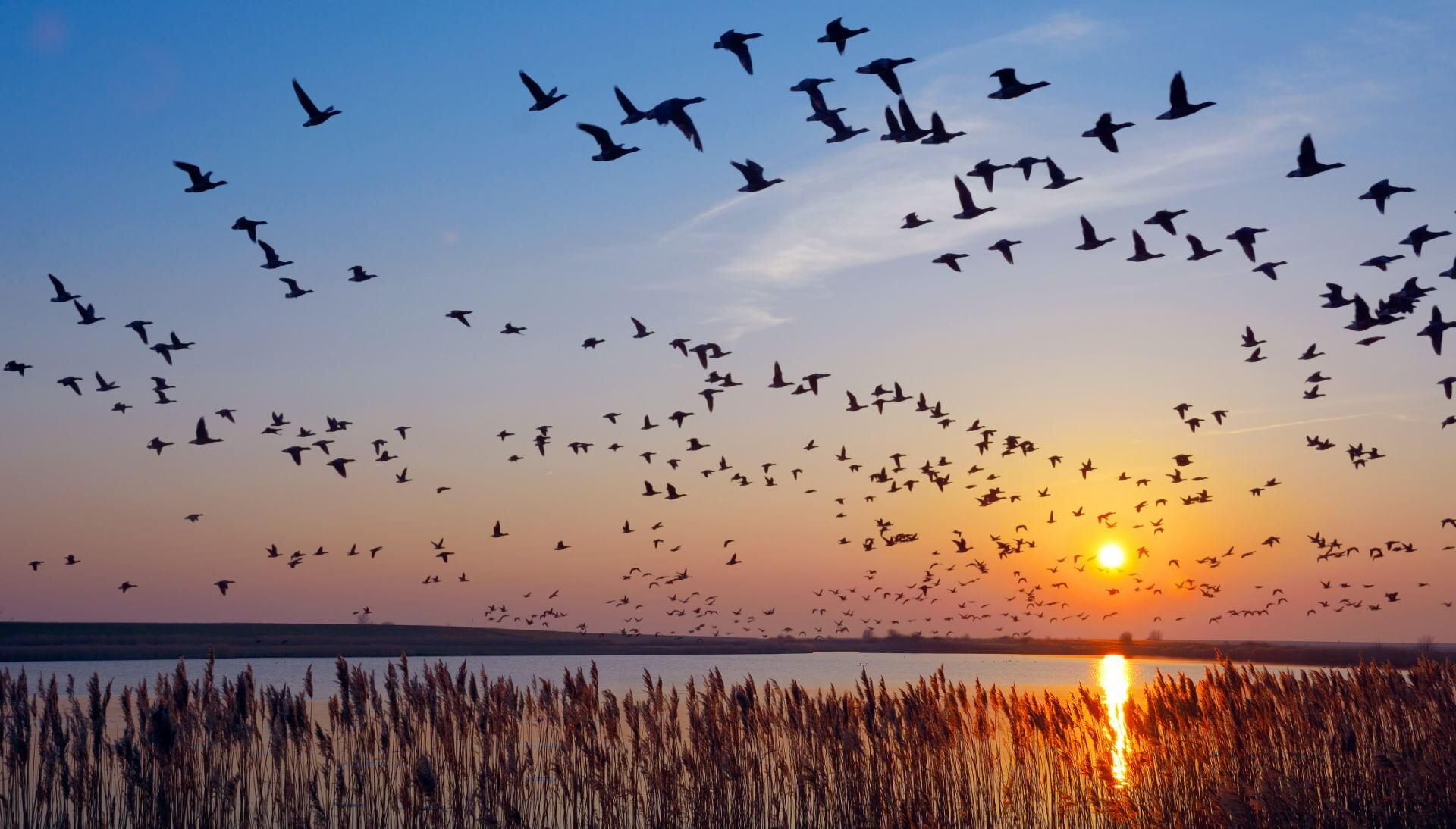 Vögel Fliegen In Den Süden