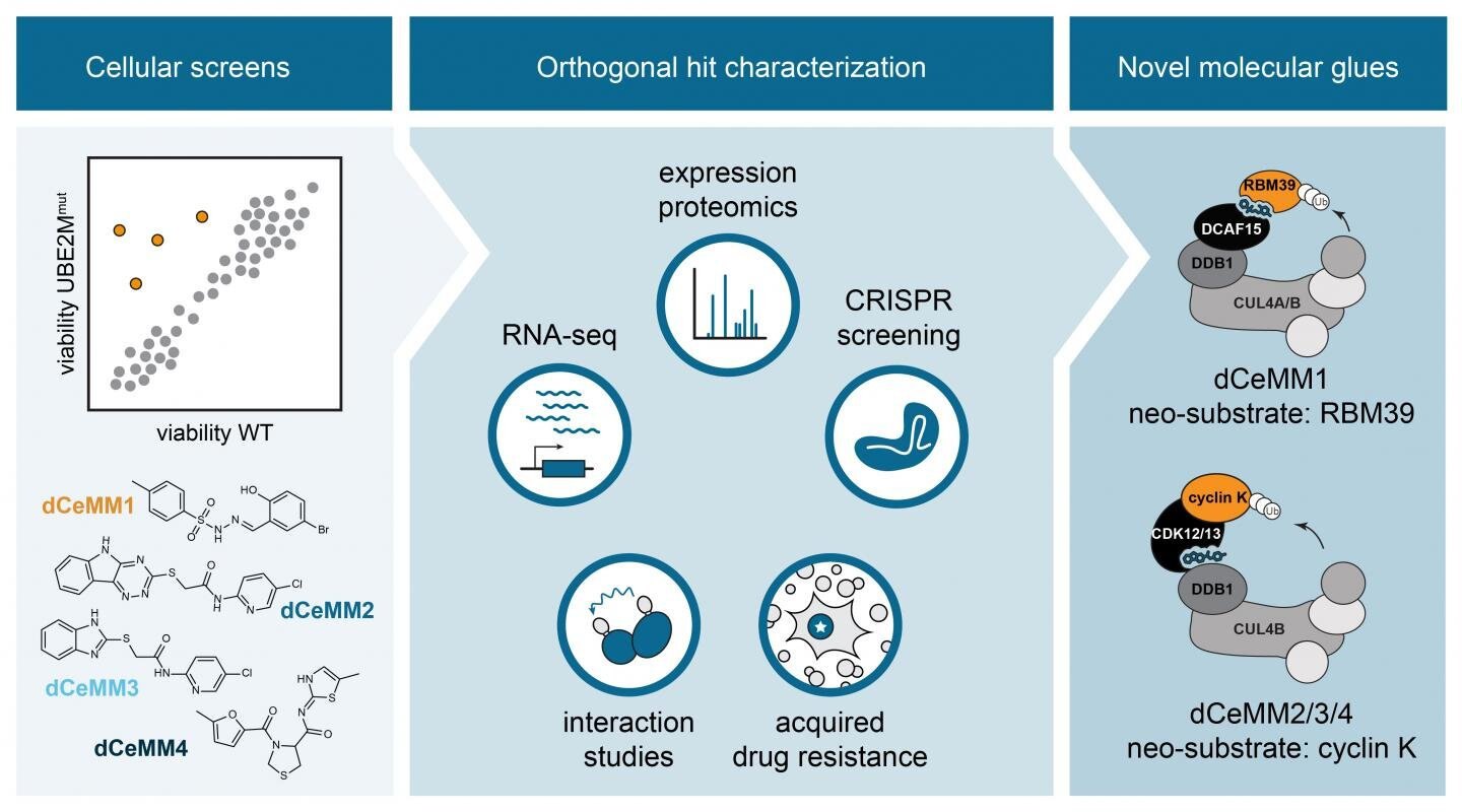Drug discovery: First rational strategy to find molecular glue degraders