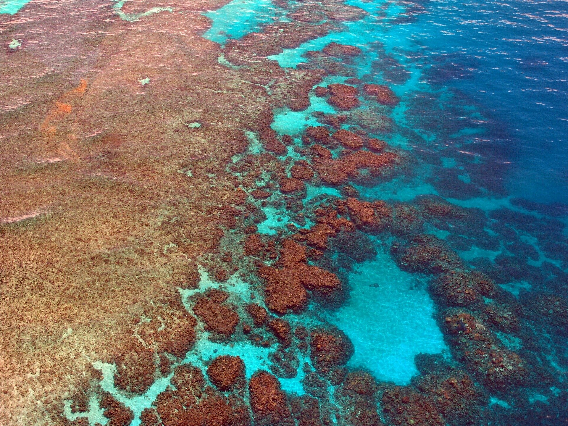 Genes unlock clues to the evolution and survival of the Great Barrier Reef