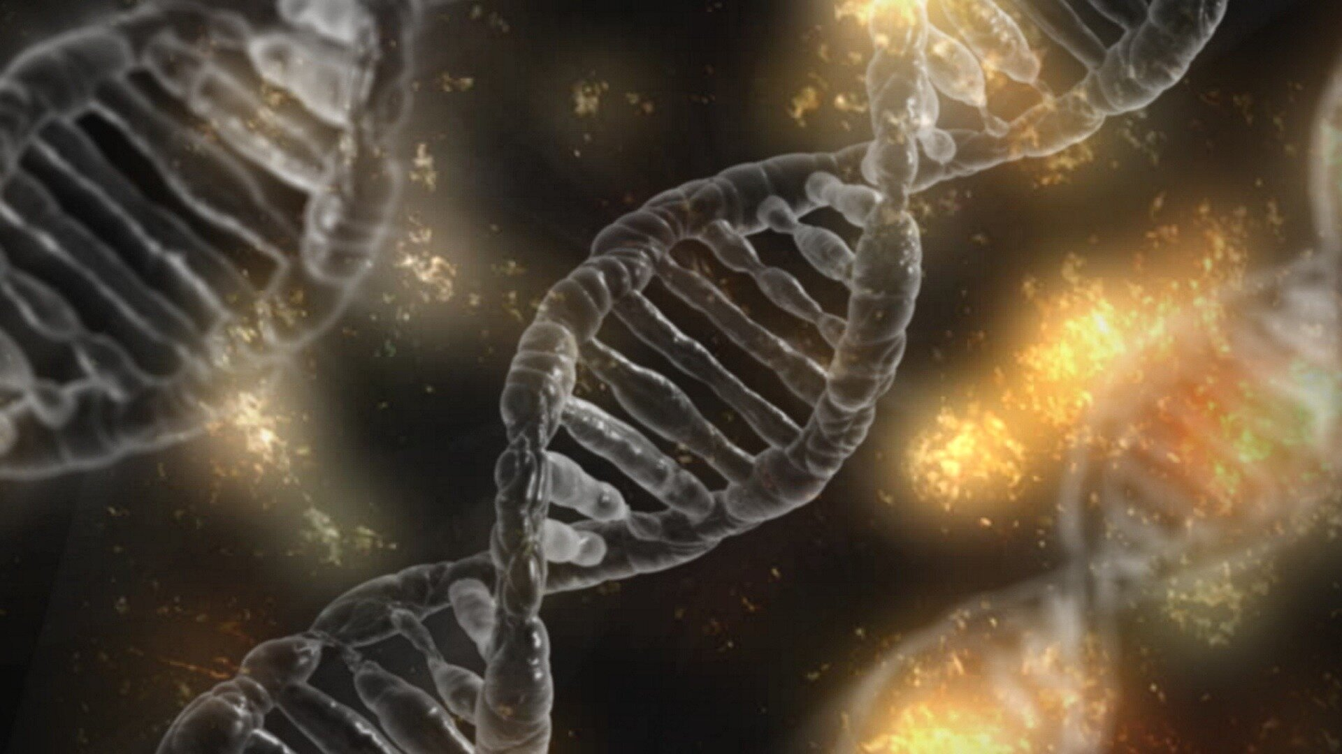 Researchers discover how genome controls early human development