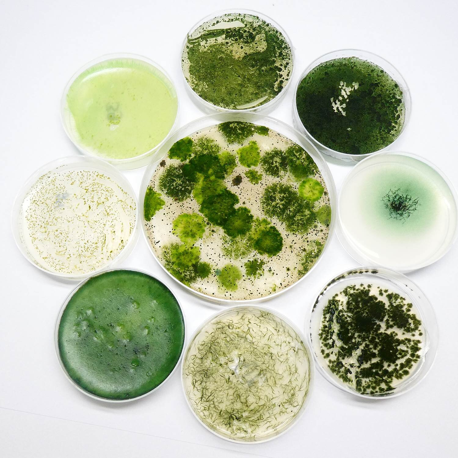 Cyanobacteria: Small candidates as great hopes for medicine and biotechnology