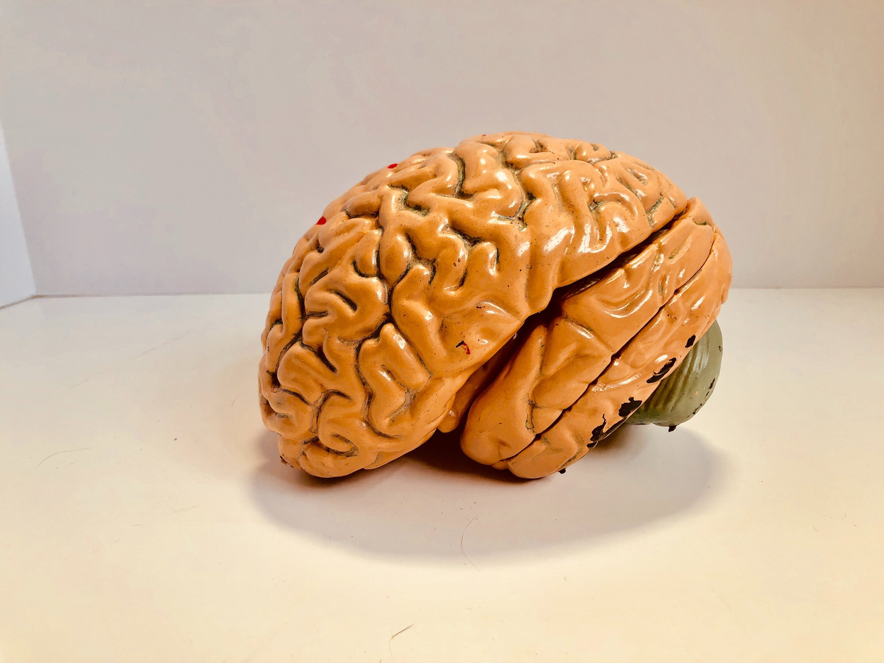 Human brain and testis found to have the highest number of common proteins