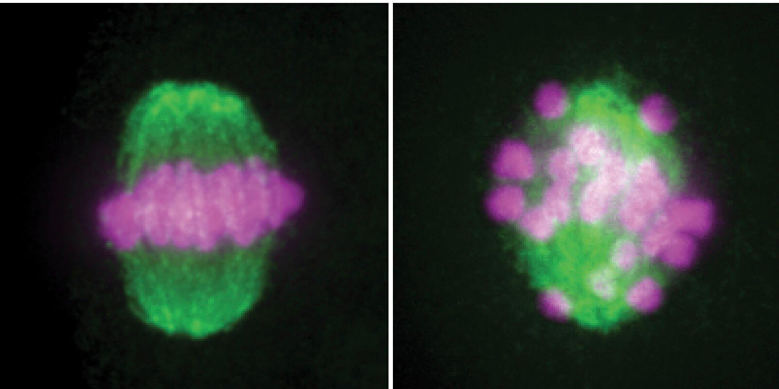 photo of A critical enzyme for sperm formation could be a target for treating male infertility image