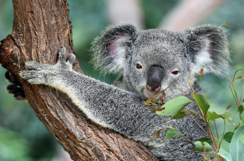 Advancing wildlife genomics through the development of molecular methods